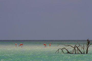 Flamingo's von Jeroen Meeuwsen
