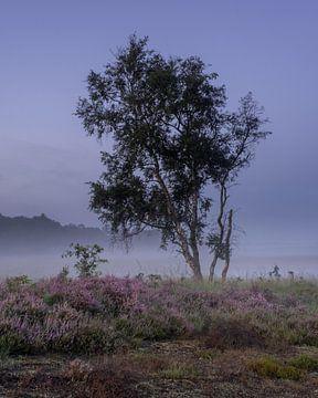 Baum auf der Heide von Manja van der Heijden