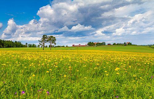 Frühling in Schweden von