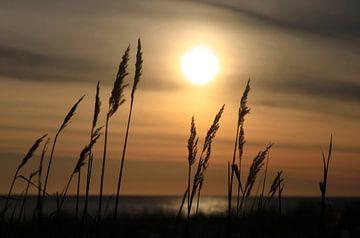 Ostsee am Abend von Thomas Jäger