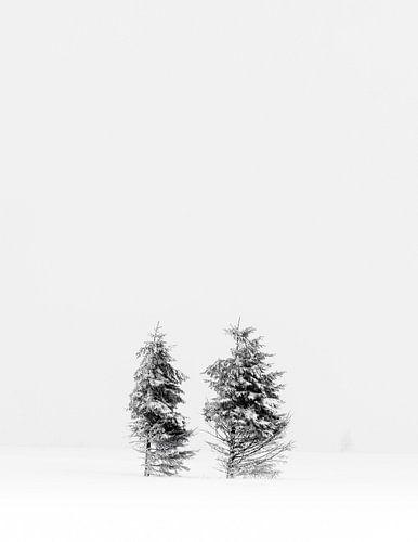 Winter Hoge Venen van