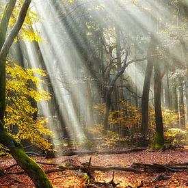 Waldaufgang von Lars van de Goor