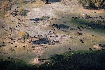 Okavangodelta van paul snijders