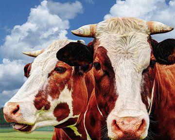 Zweimal Kuh normalerweise auf der Weide von Hendrik-Jan Kornelis