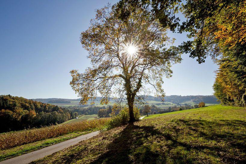 Heuvellandschap van Robert van Willigenburg