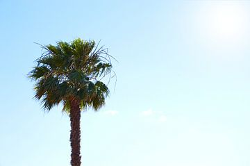 Eenzame palmboom van Dustin Musch