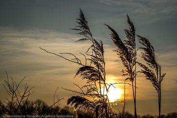 zonsondergang  van Angelique Rademakers