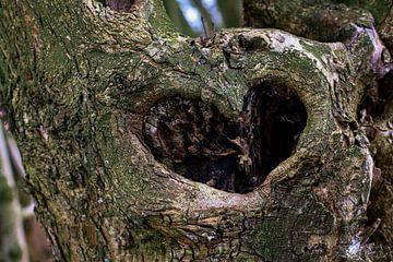 Heart of the tree van Moniek Van der zwan