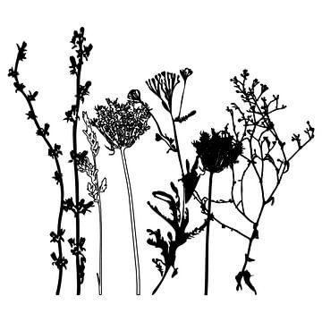 Botanische illustratie met planten, wilde bloemen en grassen 7.  Zwart wit.