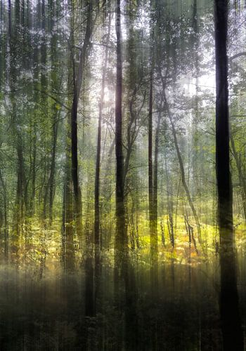 open plek in bos van