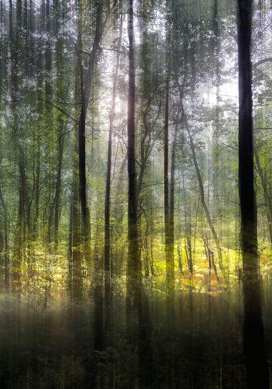 open plek in bos van Henk Speksnijder