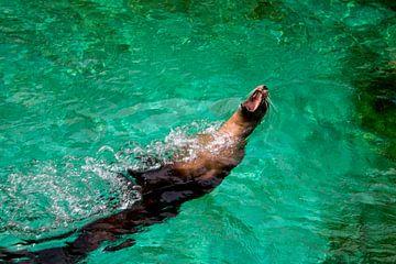 Zeehond in actie van Artoon Projects