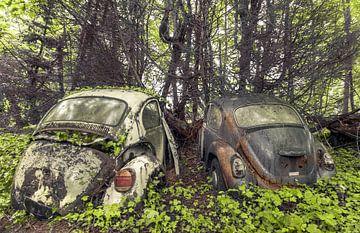 Käfer im Wald von Olivier Photography