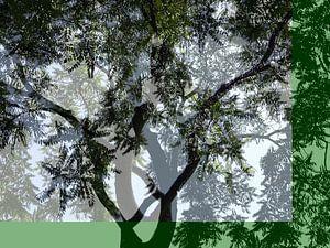 Tree Magic 39