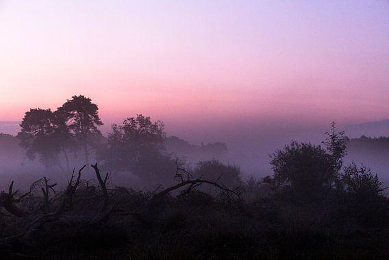 Ochtend op de heide, Strijbeek, Strijbeekse heide, Noord-Brabant, Holland, Nederland afbeelding heid