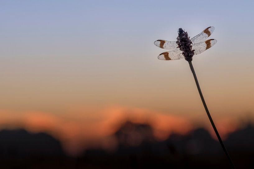 Bandheidelibel net voor zonsopkomst van Erik Veldkamp