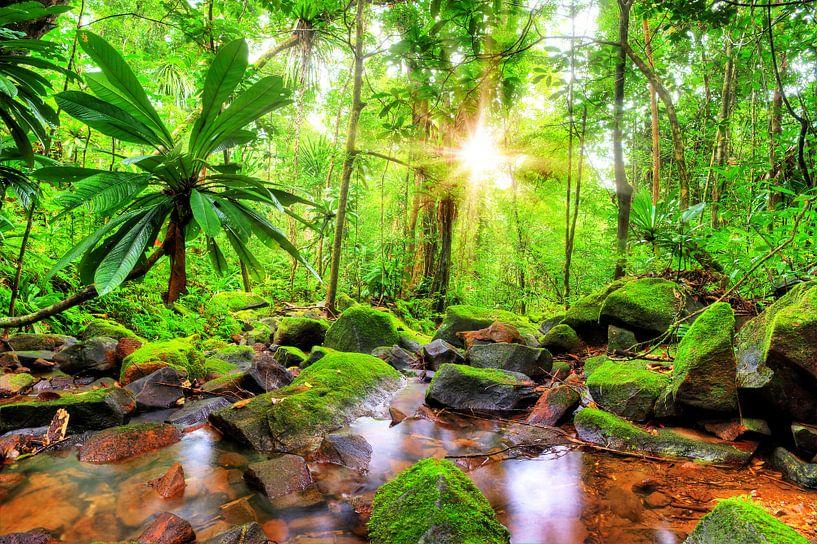 Beekje in de jungle van Masoala van Dennis van de Water