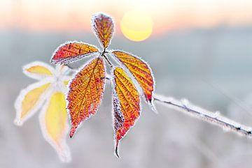 Kalter Herbst Morgen von Christa Thieme-Krus