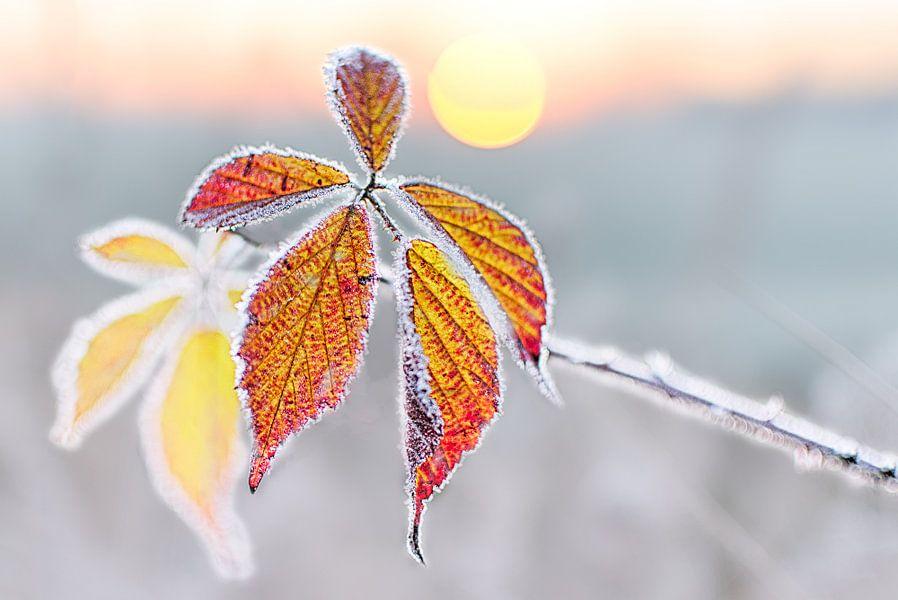 Koude Herfstochtend