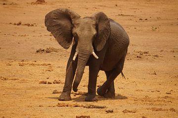 Olifant in de aanval van Erna Haarsma-Hoogterp