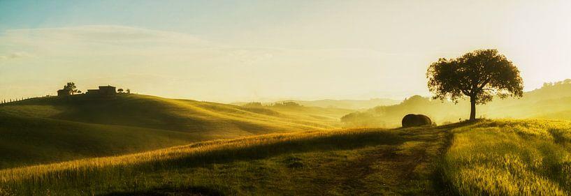 Tuscan Light II van Lars van de Goor