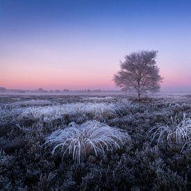 Frozen van Mario Visser