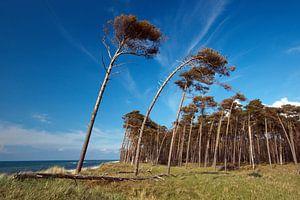 Windflüchter von Marko Sarcevic