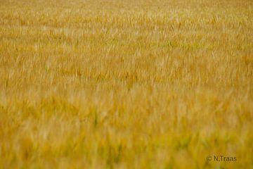 Das goldene Feld von Niek Traas