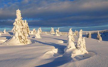 Winter auf der Hochebene, Norwegen von Adelheid Smitt