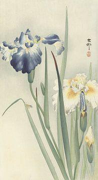 Iris de Ohara Koson