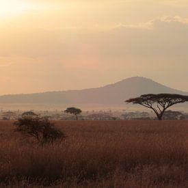 Pour les amateurs de safari et d'animaux de la savane, la Tanzanie sur toile, Xpozer, Aluminium, poster ou photo à encadrement