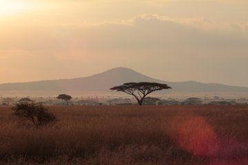 Serengeti Sonne von Olaf Piers