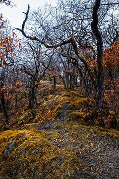 Alte Bäume von Joris Machholz