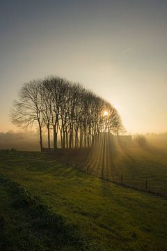 Zonnestralen door bomen van Moetwil en van Dijk - Fotografie