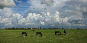 Friese paarden in Fries weidelandschap