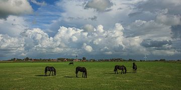 Friese paarden in Fries weidelandschap van Fonger de Vlas