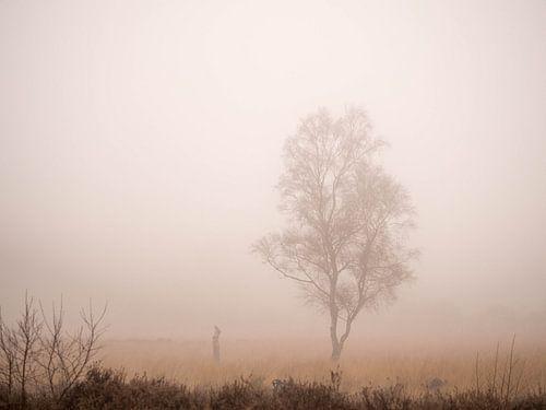 Eenzame berk in de mist van