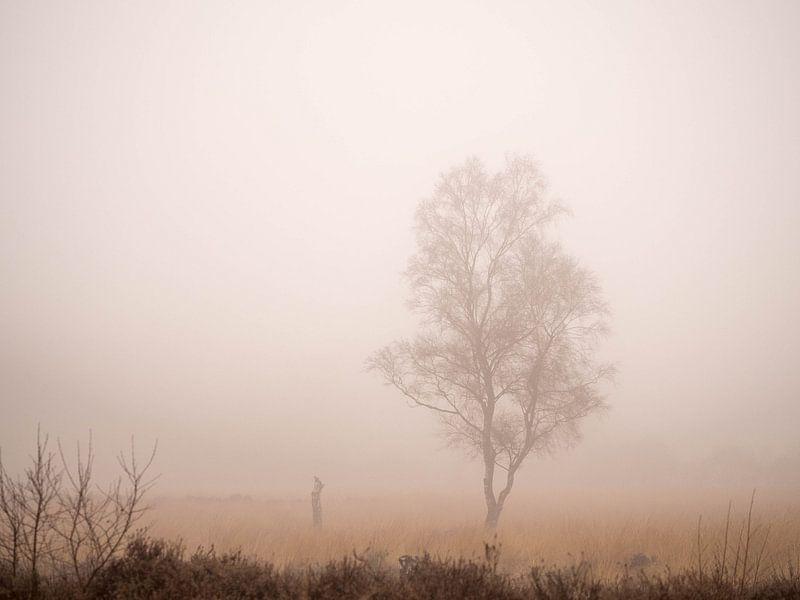 Eenzame berk in de mist