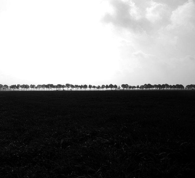 Bomen van Leo de Graaf