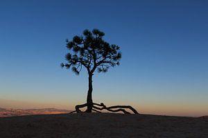 Denneboom op de rand van Bryce Canyon van Gerben Tiemens