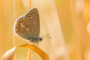 Vlinder op gras van Hugo Meekes