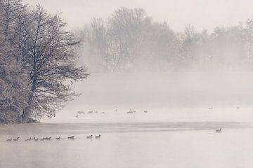 Watervogels op vijver in mist in de ochtend in winter met sneeuw van Robert Ruidl
