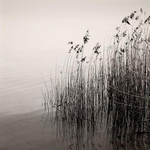 Reeds At The Lake von Lena Weisbek