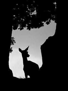 Zwartwitte opname van een vrouw Edelhert (Cervus elaphus) van AGAMI Photo Agency