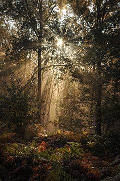 Lever de soleil brumeux dans les forêts du Limbourg sur Ellis Peeters