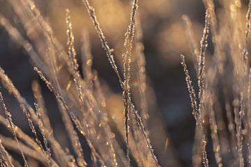 Gefrorenes Gras in der Morgensonne von KB Design & Photography (Karen Brouwer)