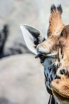 Giraf van dichtbij van Lisanne Bosch