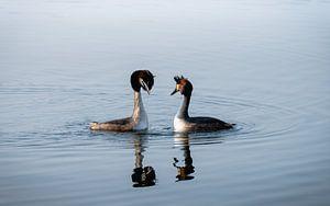 Futen paar op het water van