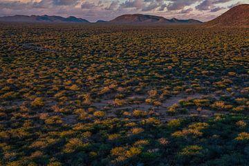 Het eerste ochtendlicht over de Afrikaanse Savanne van Joris Pannemans - Loris Photography
