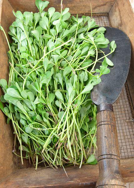 food2188 van Liesbeth Govers voor omdewest.com